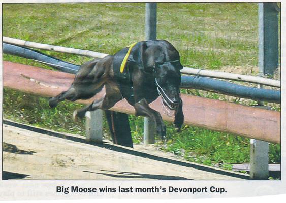 Big Moose 2008 Devonport Cup