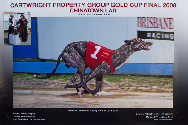 The Albion Park Group One Gold Cup goes to Chinatown Lad