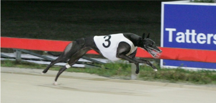 Bell Haven winning the 2013 Chinatown Lad at Hobart