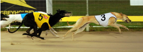 2013 Greyhound of the Year She's All Class