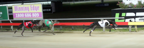 Long-View-Belle-wins-Easter-Cup-from-Tricky-Tails-and-Supreme-It-Seems-800x266