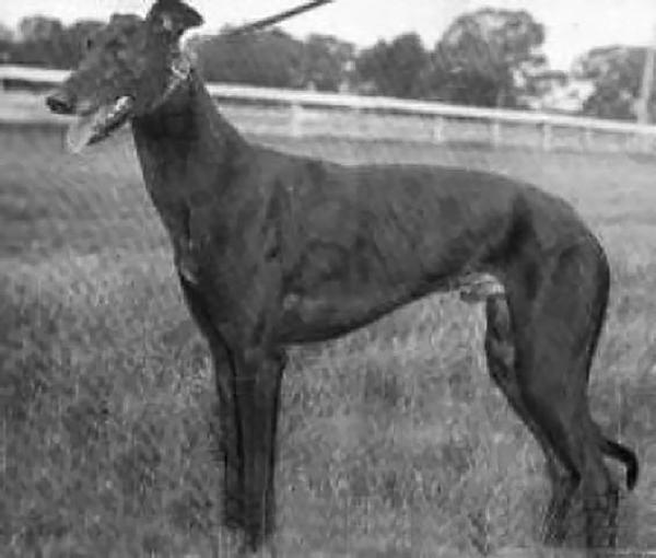 new Greyhound_Rocket_Jet-big